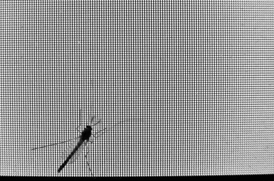 mosquito-monitor